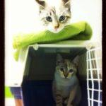 Mimi e Lolita
